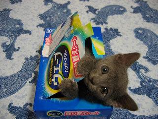 ウェーブ猫