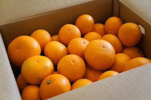 kiyomi_orange1.jpg