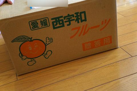 kiyomi_orange2.jpg